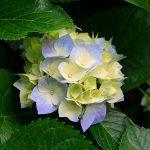 Sed fringilla mauris sit amet nibh